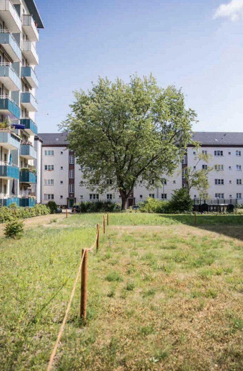 Aus Stadtleben Bluehwiese Lankwitz