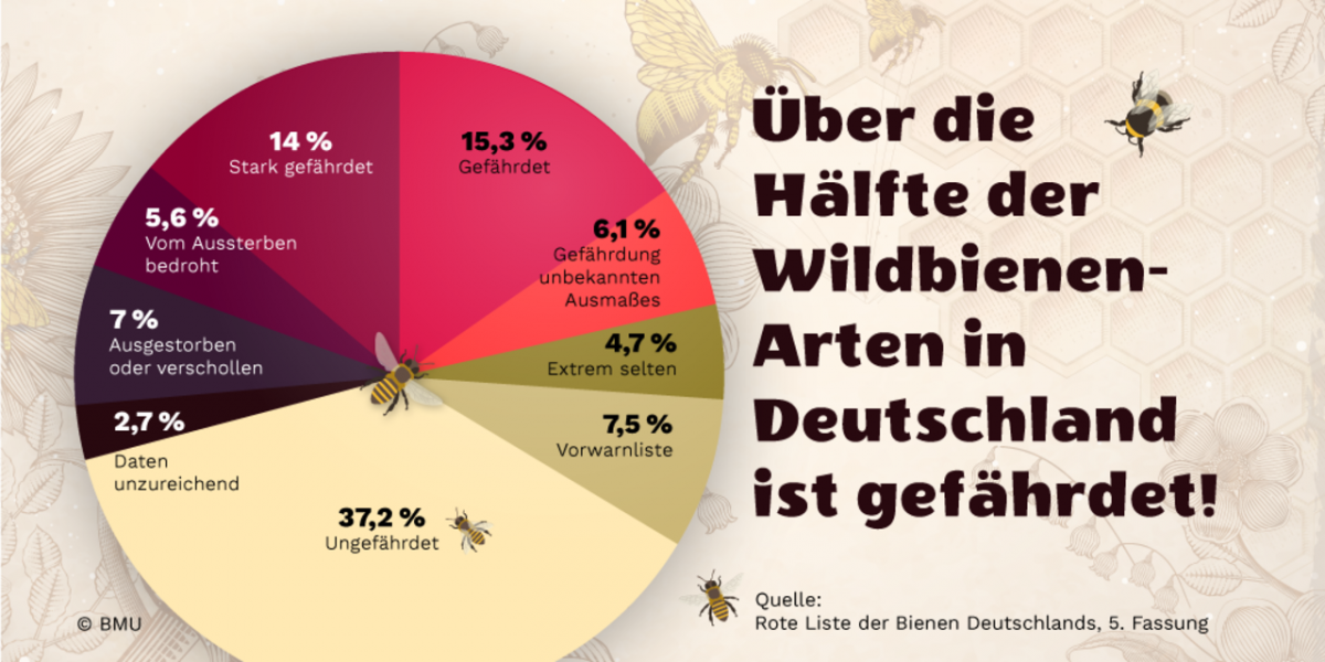 BMU Graphik Wildbienen