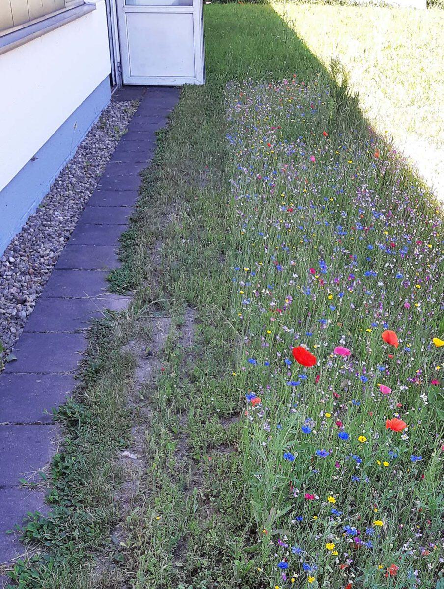 Blühfläche neben der Werkstatt