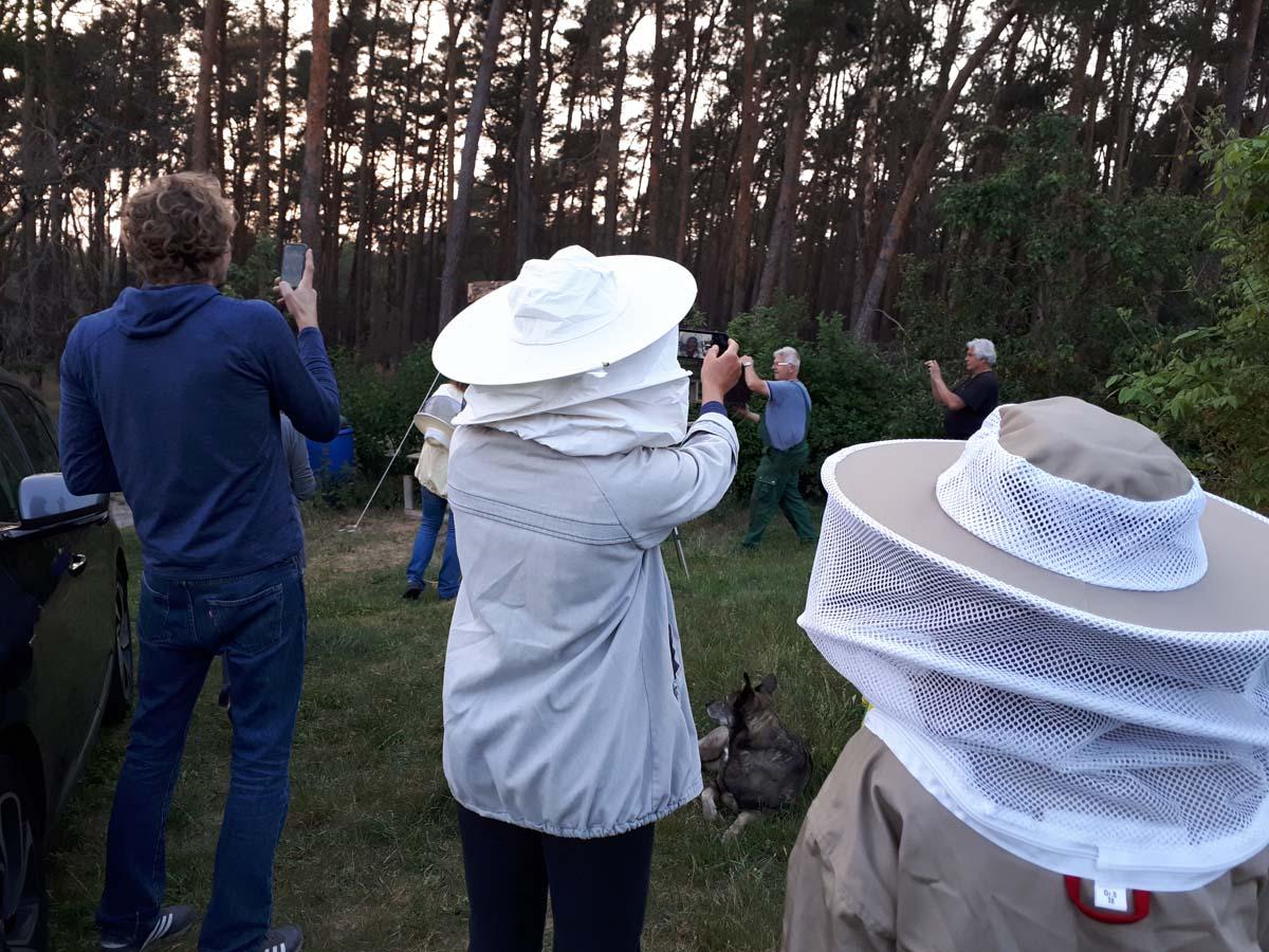 Einsetzen der Bienen 1