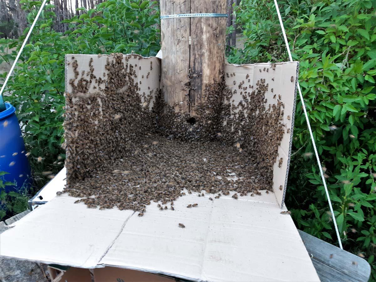 Einsetzen der Bienen 2
