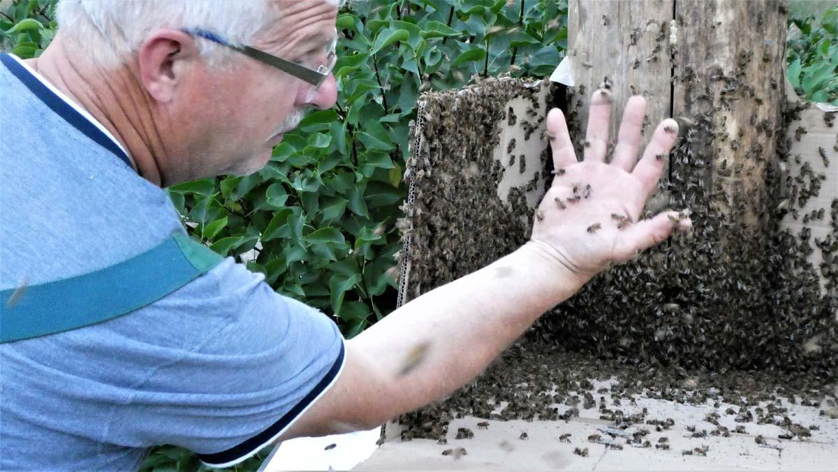 Einsetzen der Bienen 3