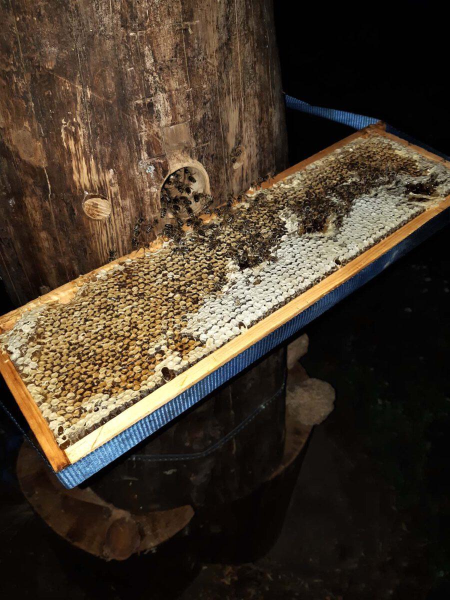 nächtliche Futterung mit einer Honigwabe