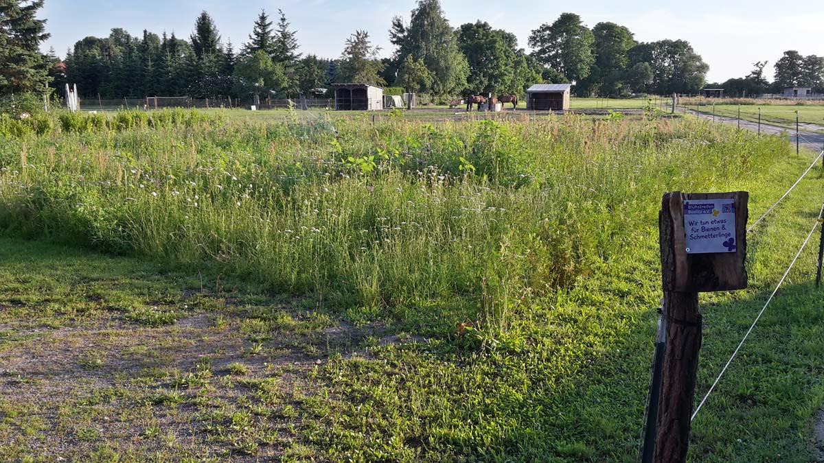 Blühwiese private Fläche