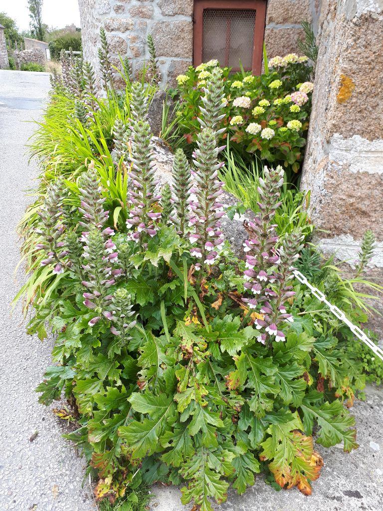 Insektenfreundliche Blumen