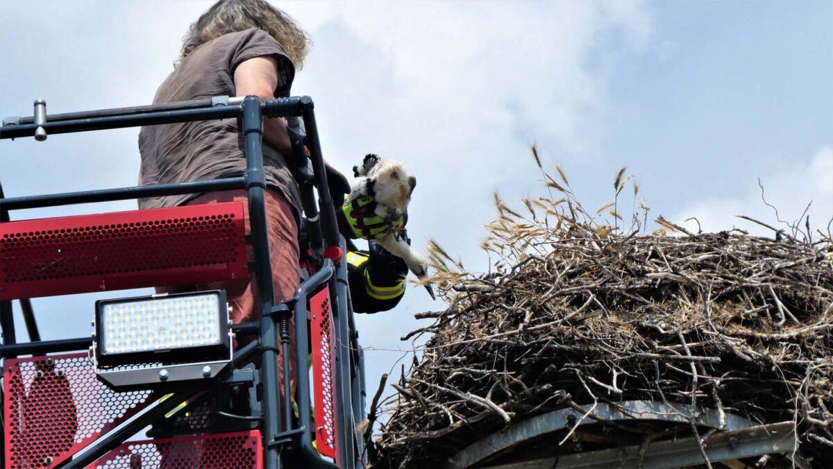 K.Pahl und Feuerwehr am Nest